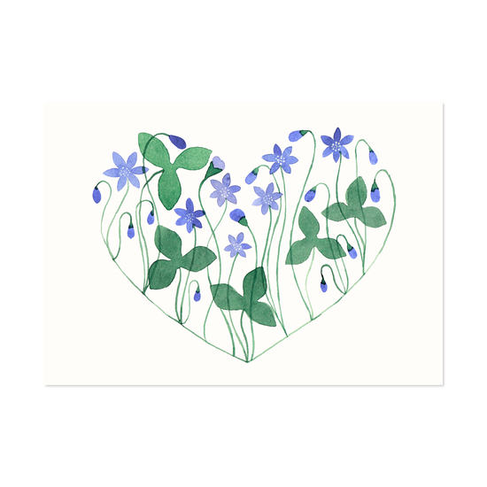 Hepatica Heart Postcard